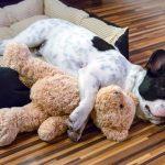 3 Tratamientos clave para la insuficiencia cardíaca en perros