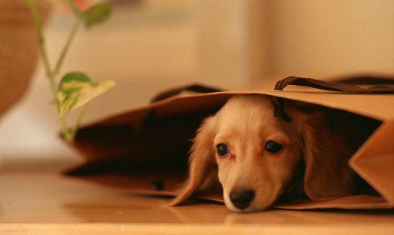 4 factores de riesgo peligrosos de la anestesia en mascotas