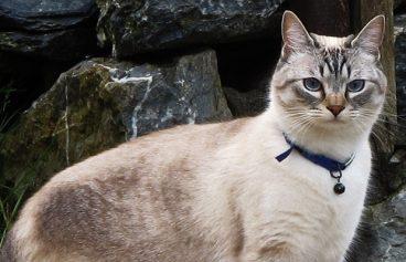 5 cosas que debes saber antes de adoptar un gato