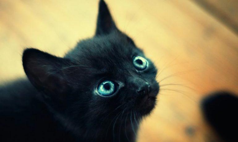 8 Cosas de los gatos negros que NUNCA te habían contado