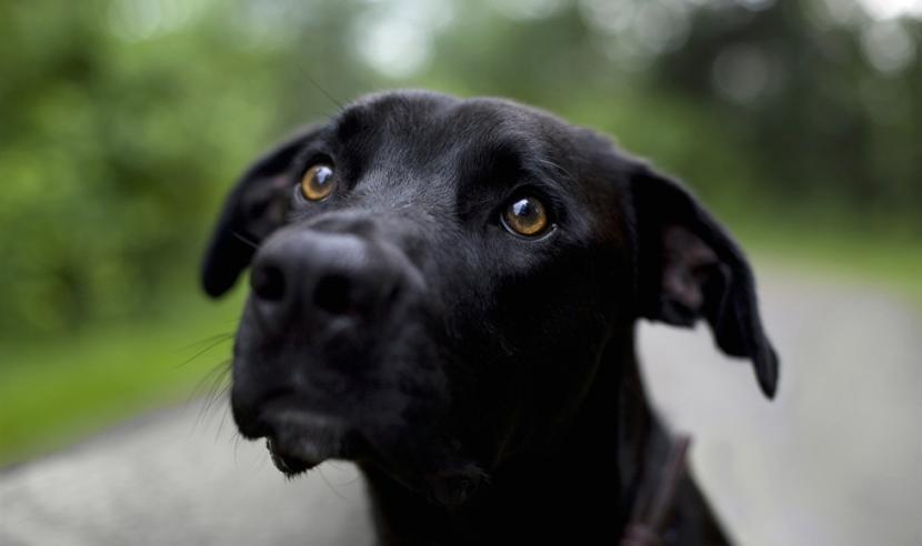 A qué se debe la mirada triste de los perros