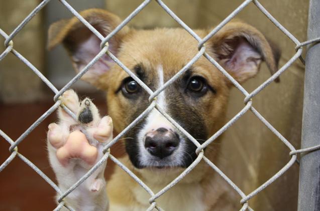 Adoptar un perro en Madrid a través de una CPA