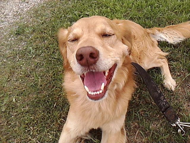 Adoptar un perro en Zaragoza