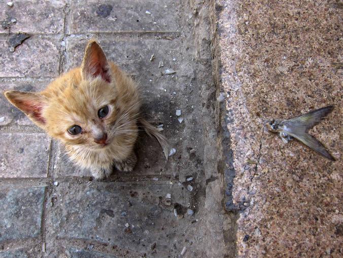 Al adoptar un gato callejero