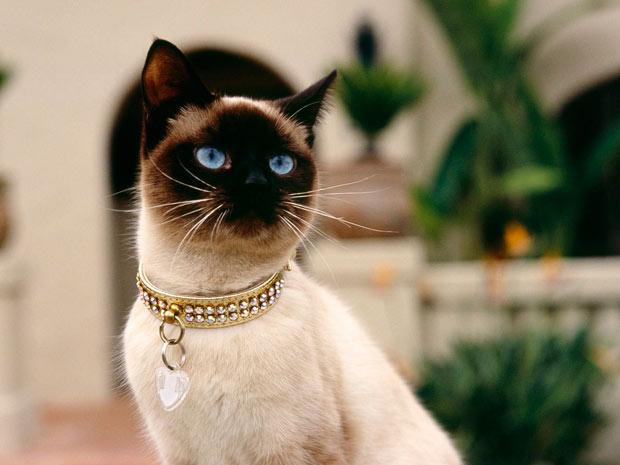 Aprende a prevenir el golpe de calor en gatos