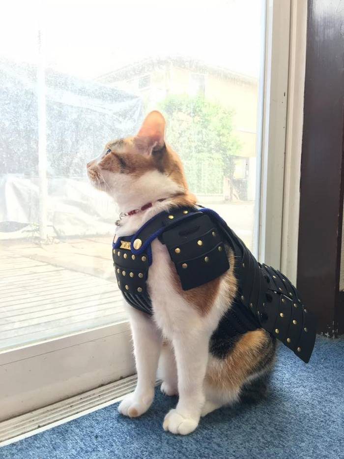 Armaduras de samurái para perros y gatos japoneses