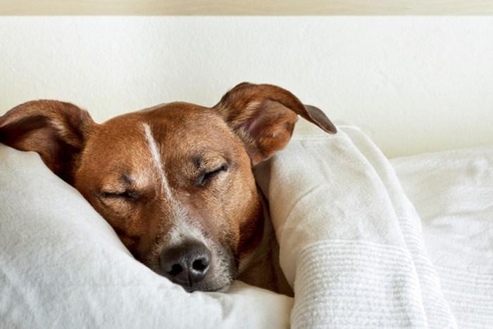 Cómo afecta la época del año al sueño de los perros