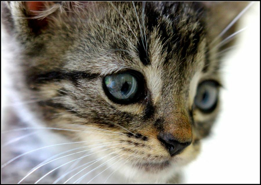 Cómo auxiliar a gatos con fracturas