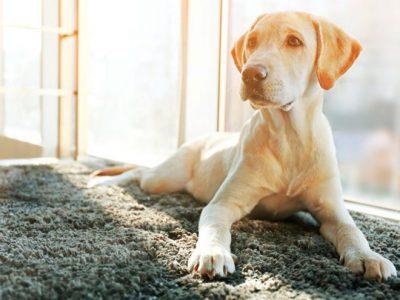 Cómo es la flora intestinal del perro