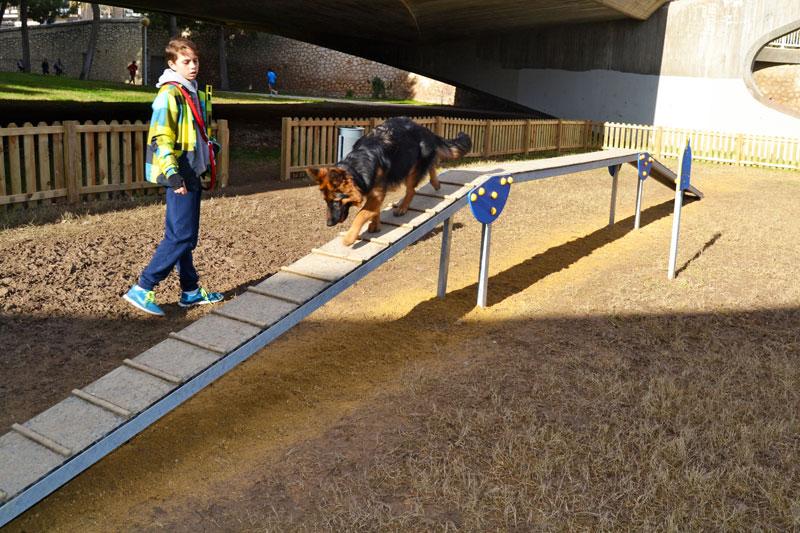 Cómo practicar agility canino