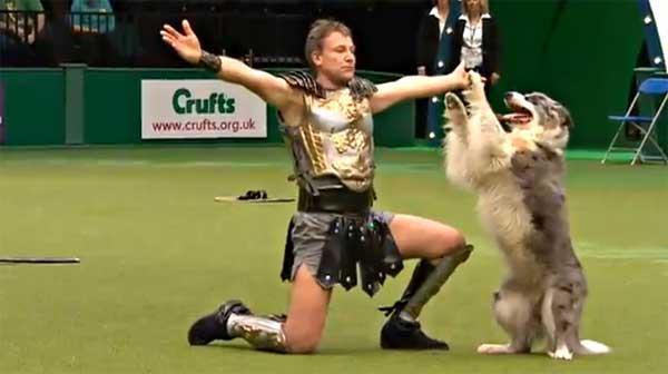 Cómo se practica el freestyle canino