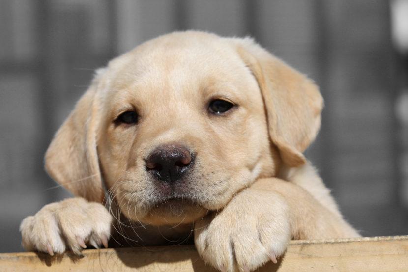 Cómo socializar a un perro joven