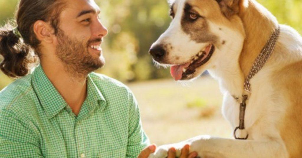 Cómo te puede ayudar la etología canina