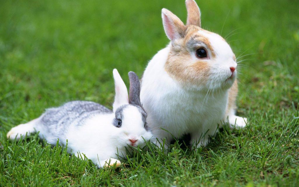 Causas del abandono de conejos