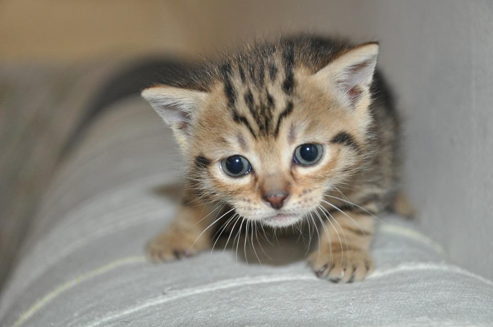 Causas más habituales de envenenamiento en gatos