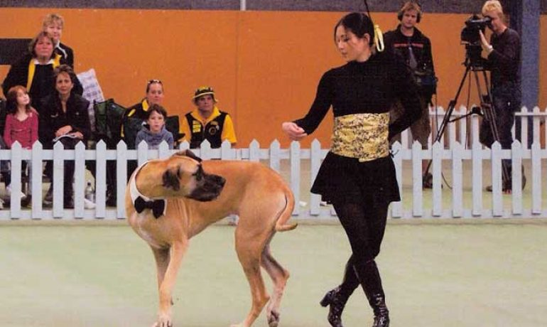 Claves del dog dancing o freestyle canino