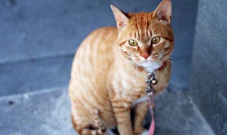 Consejos clave para adoptar un gato callejero