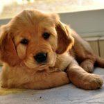 Consejos clave para socializar a un perro cachorro