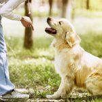 Consejos de adiestramiento canino