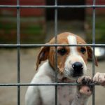 Consejos para adoptar mascotas por internet