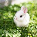 Consejos para adoptar un conejo