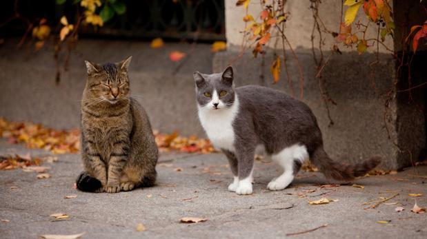 Consejos para adoptar un gato callejero