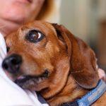 Consejos para adoptar un perro adulto