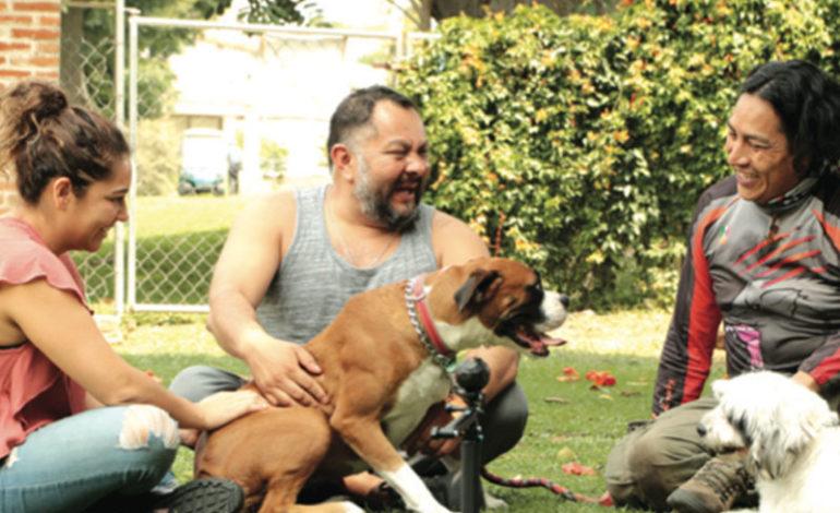 Consejos para elegir a un buen etólogo canino