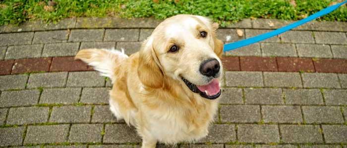 Consejos para socializar a un perro adulto