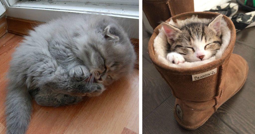 Cuántas horas duermen los gatos