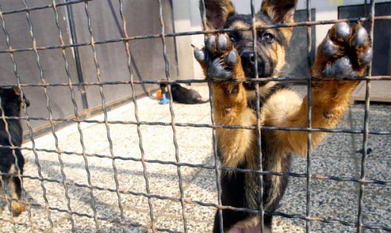 Dónde adoptar un perro en Asturias