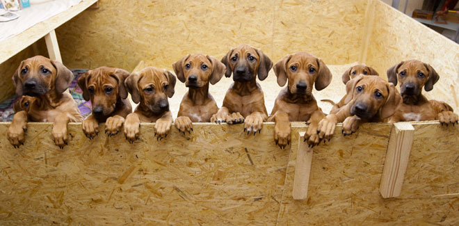 Dónde puedo adoptar un perro en Asturias