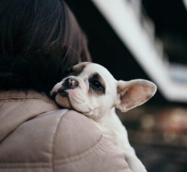 Dónde puedo adoptar un perro en Madrid