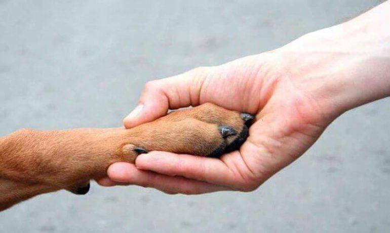 Dónde puedo adoptar un perro en Sevilla