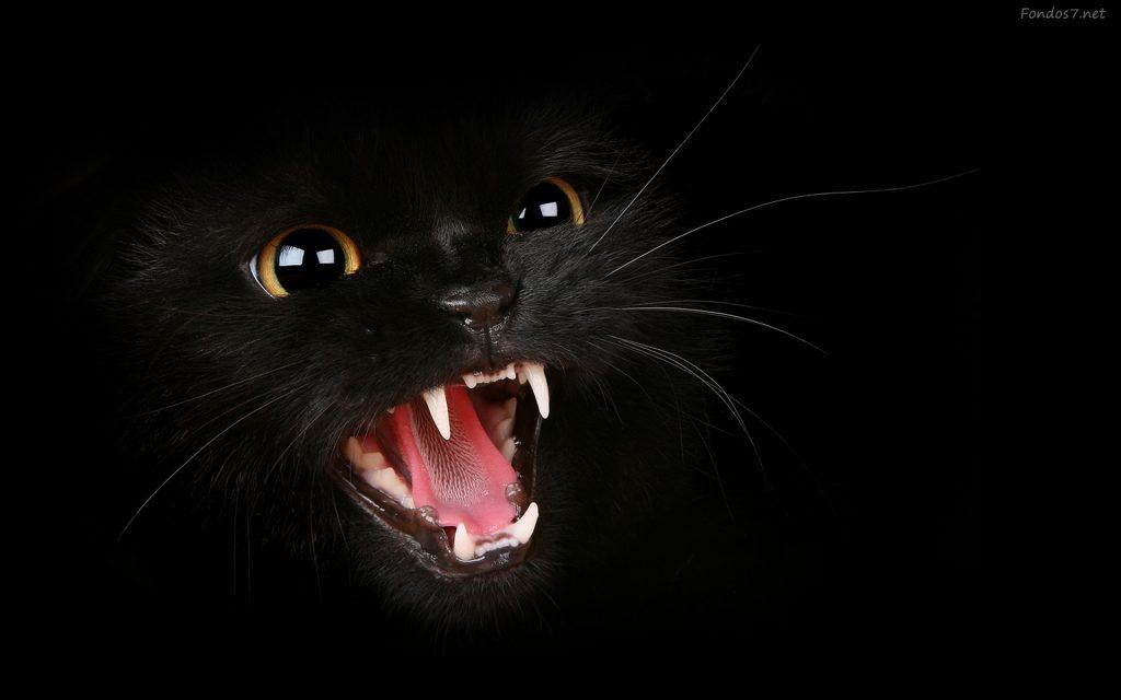 Datos curiosos sobre los gatos negros