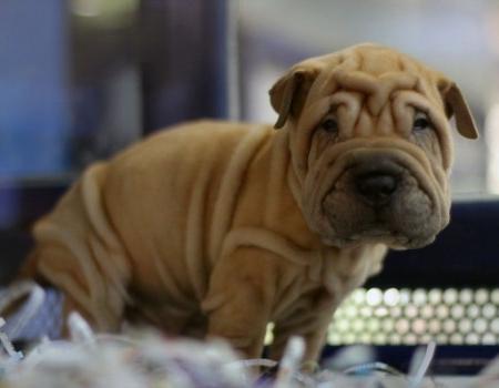 Dermatitis por contacto en perros