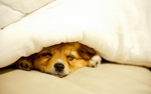 Descubre cuántas horas duermen los perros