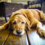 Descubre los mejores suplementos naturales para perros