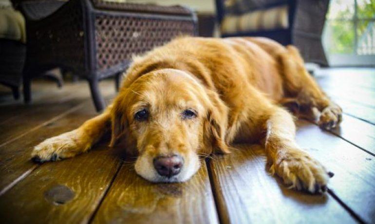 Protector gastrico casero para perros