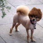 Descubre si debes o no cortar el pelo al perro en verano