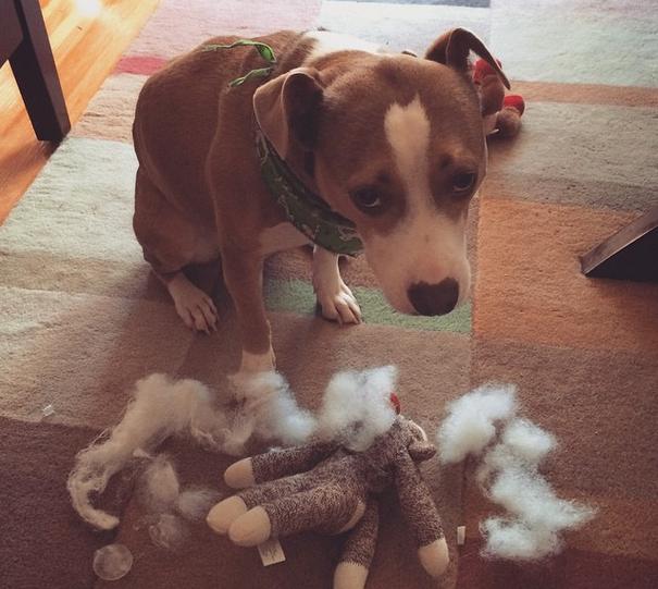 El aprendizaje de los perros