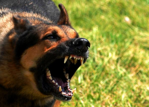 En qué consiste el adiestramiento canino tradicional