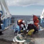 Encuentran un pez sin cabeza durante una expedición