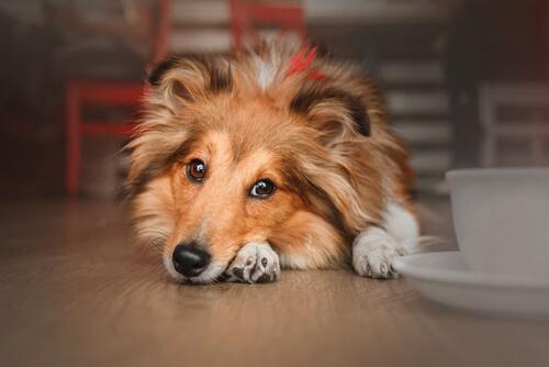 Establecimientos Dog Friendly en Madrid y Barcelona