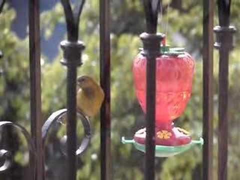 Este verano pon agua en tu ventana para que los pájaros se hidraten