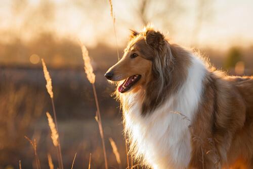 Esterilizar a un perro