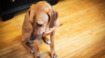 Estrés en los perros