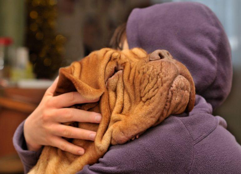 Factores de riesgo de la anestesia en mascotas