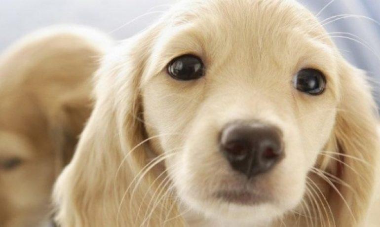 Hablamos de las vitaminas para perros de alto rendimiento
