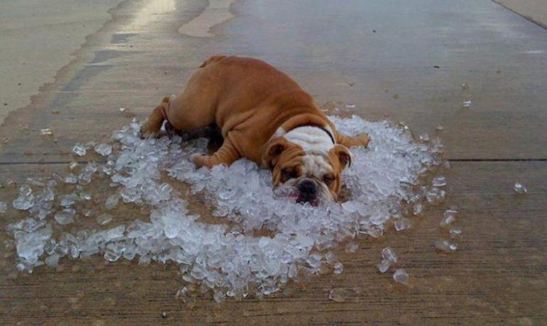Insolación en perros